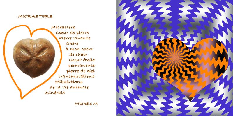 Coeur-oursin -michele-01